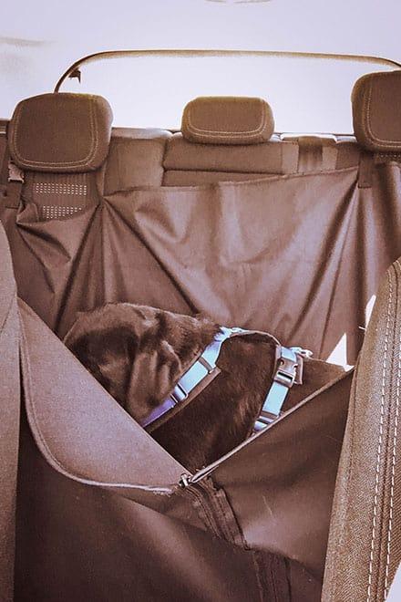 flummi-autofahren-hund-geschirr