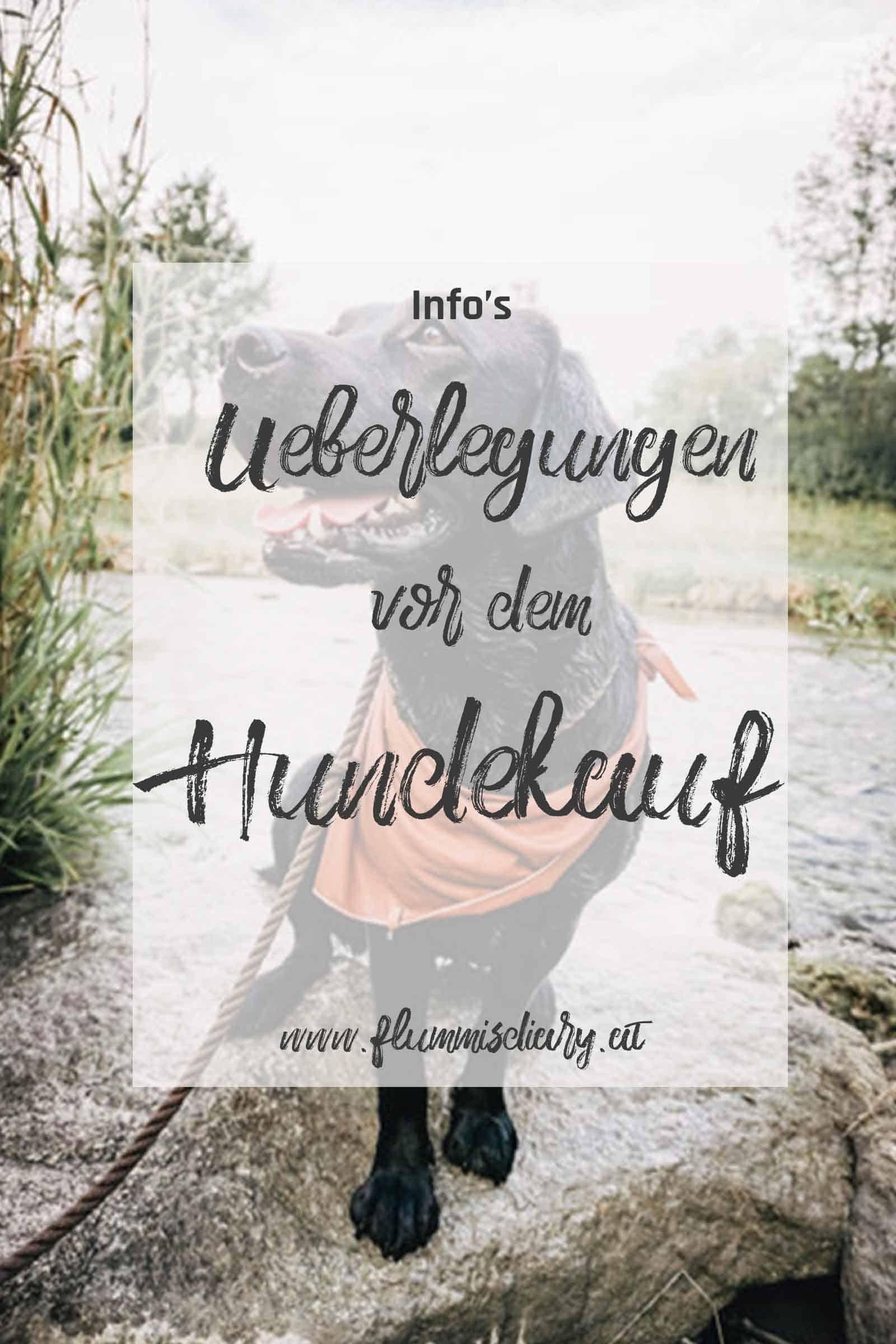 überlegungen-vor-dem-hundekauf-flummisdiary