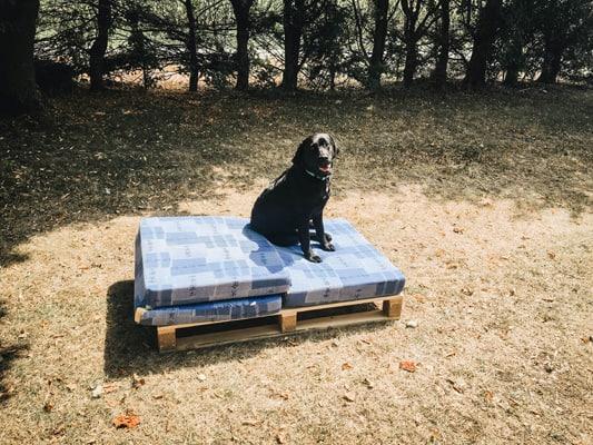 vorbereitung-hundebett-aus-palettenvorbereitung-hundebett-aus-paletten