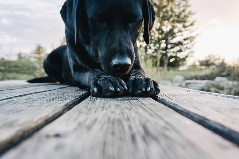 second-hand-hund-adoption