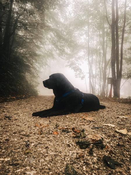 wandern-mit-hund-im-nebel