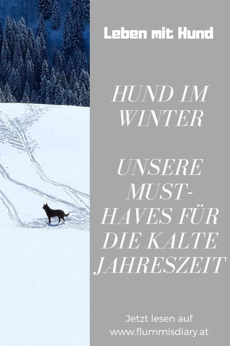 hund-im-winter-must-haves-tipps