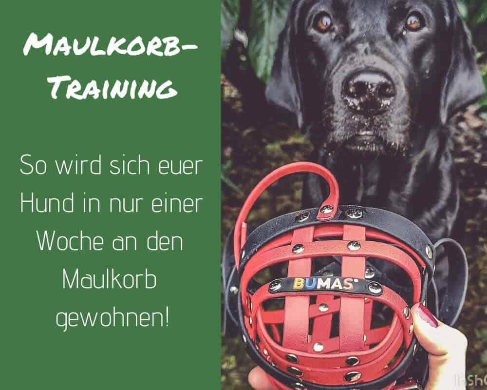 Maulkorb-training-hund-gewoehnen-flummi