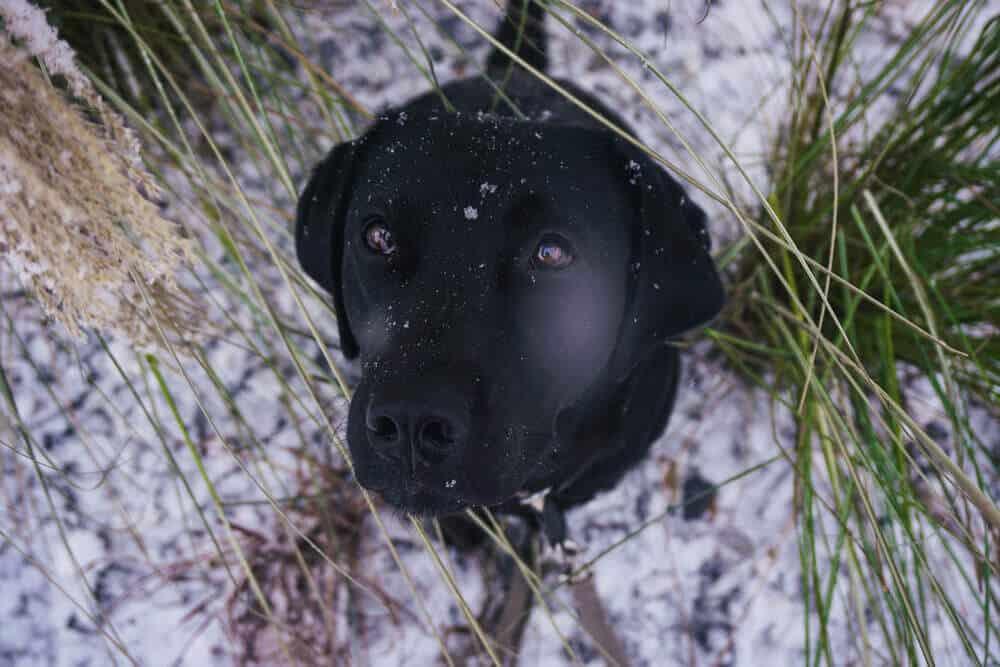 bindung-hund-aufbauen-training