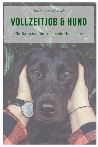 Vollzeitjob & Hund – sichere dir jetzt das gratis E-Book!
