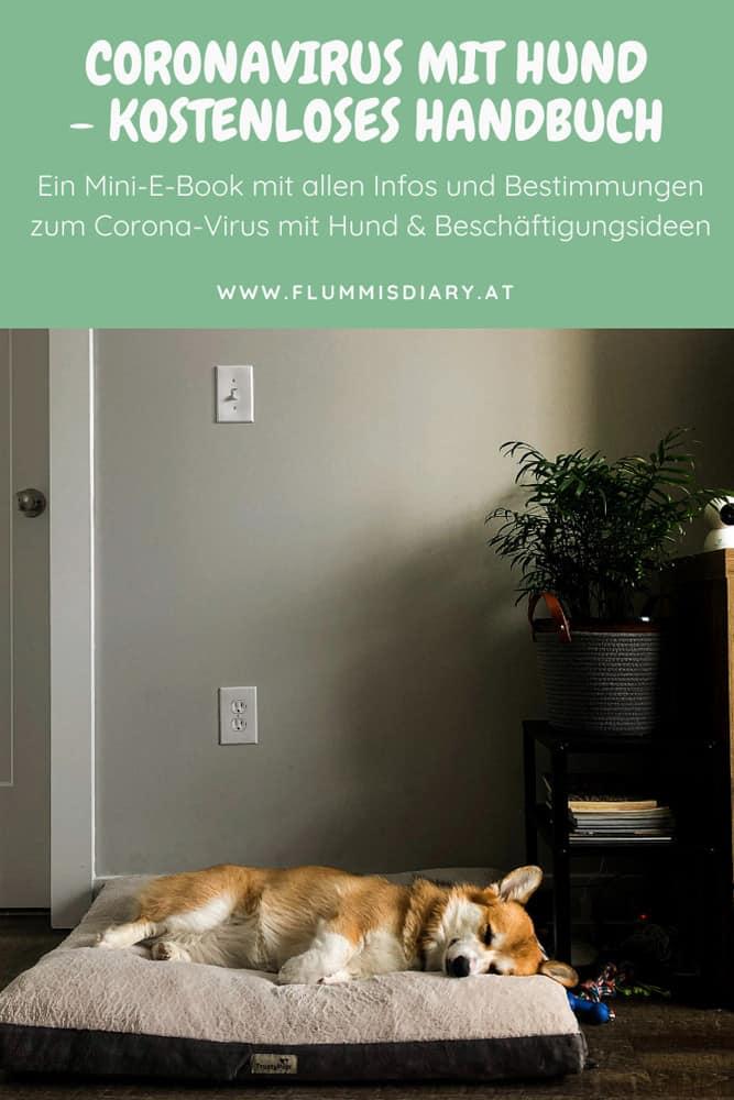 Coronavirus mit Hund – sichere dir jetzt das gratis E-Book!